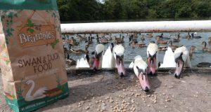 Brambles-Packaging-Swan-Feed